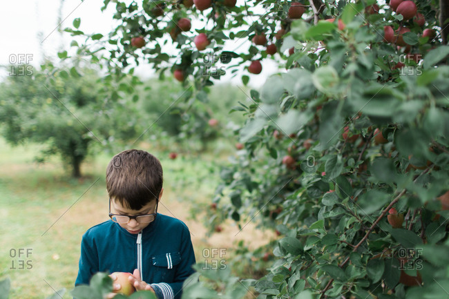 Young boy looking at apple he just picked