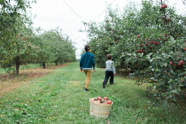 Two brothers walking through apple orchard