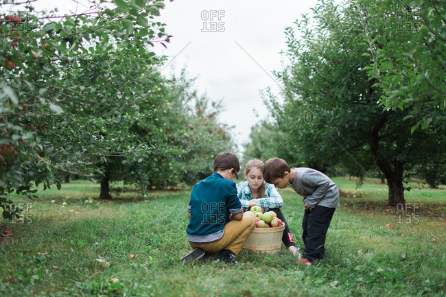 Siblings gathered around their fresh basket of apples