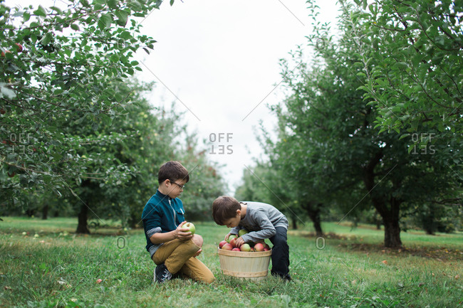 Two brothers looking through basket of apples