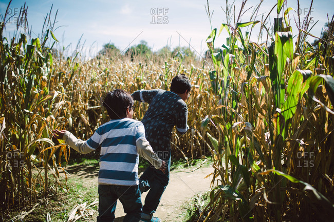 Two young boys running through cornfield maze
