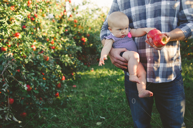 Father showing infant daughter apples in an orchard