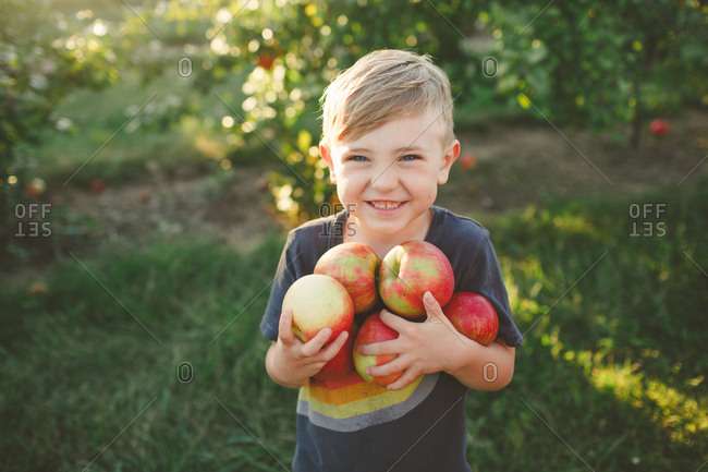Young boy with arms full of apples