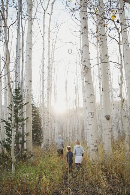 Kids standing in a birch forest
