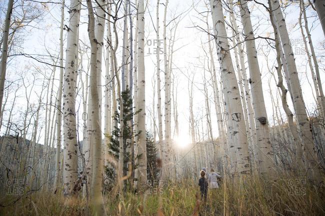 Children standing in a birch forest