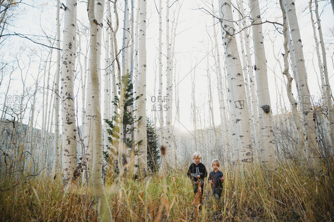 Two kids standing in a birch forest