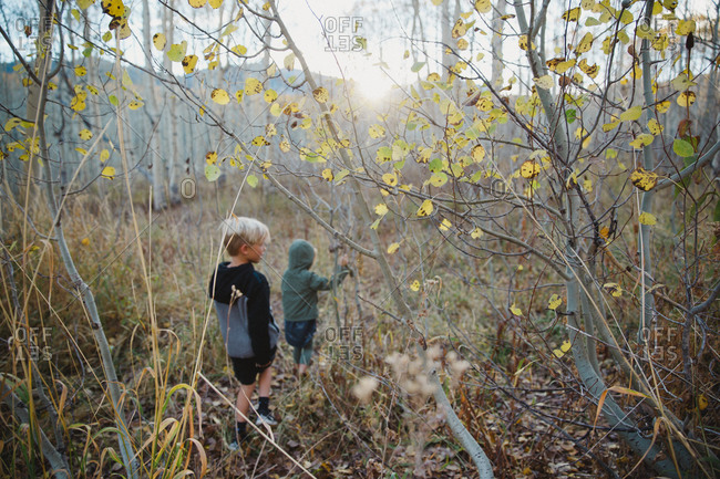 Two children exploring woodland in autumn