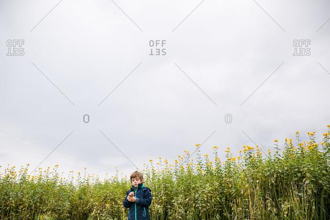 Boy standing in a field of flowers