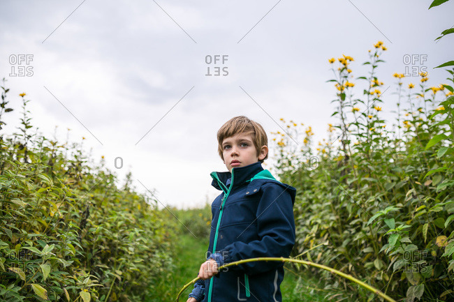 Boy standing in a field of tall flowers