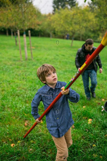 Boy using a fruit picker to pick apples