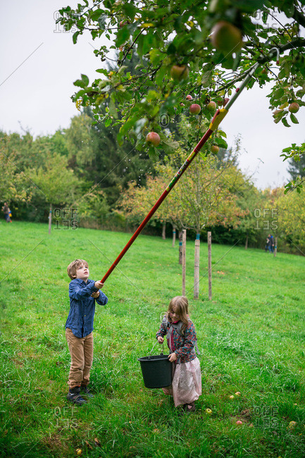 Kids using a fruit picker to pick apples