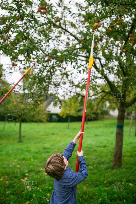 Boy uses a fruit picker in an apple tree
