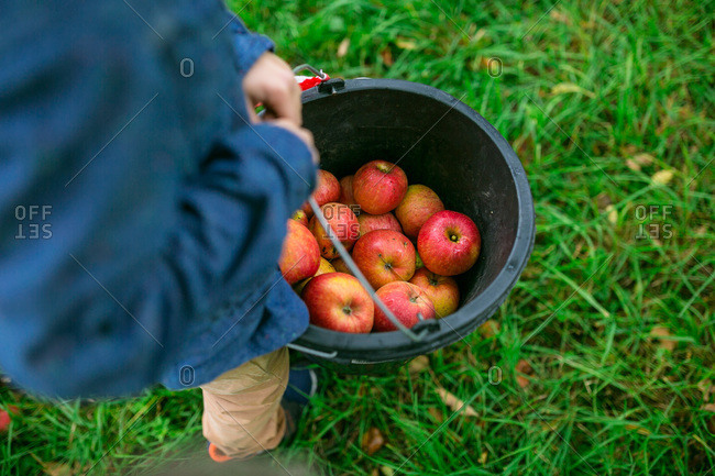 Boy carrying a bucket full of apples he picked