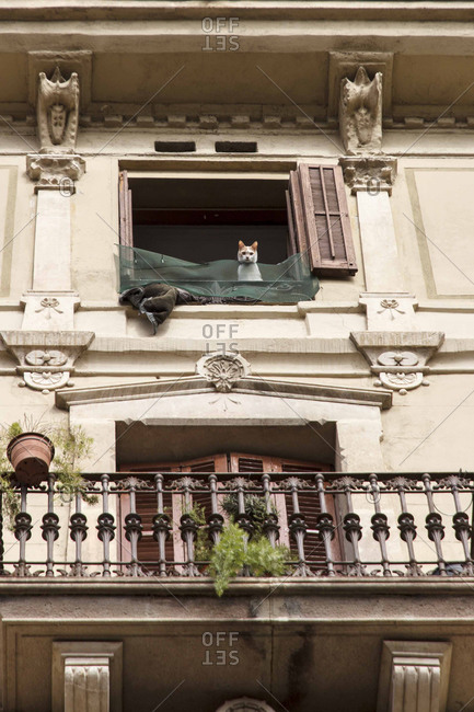 Cat peering from the balcony of a Spanish home
