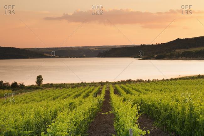 Vineyards at Lago di Corbara Lake at sunset, Perugia District, Umbria, Italy