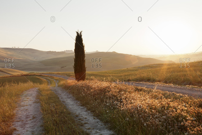 Tuscan landscape with cypress tree at sunrise, near San Quirico, Val d'Orcia (Orcia Valley), UNESCO World Heritage Site, Siena Province, Tuscany, Italy