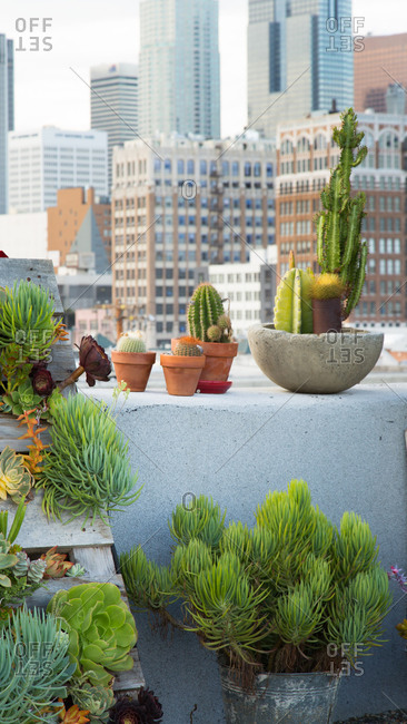 Cactus and succulents on a rooftop in Los Angeles, California