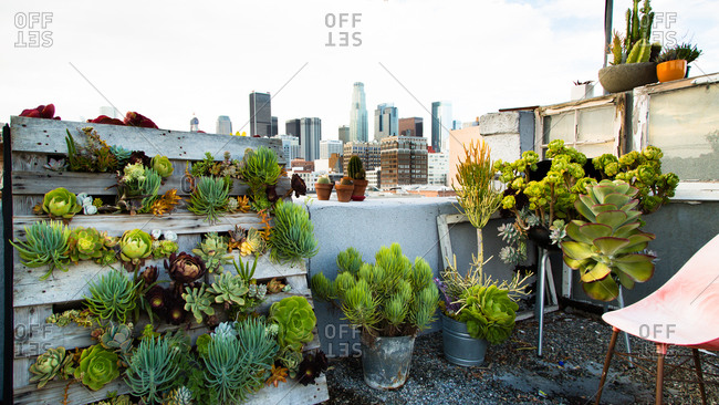 Rooftop garden in Los Angeles, California