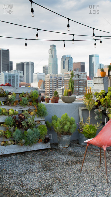 Garden on a rooftop in Los Angeles, California