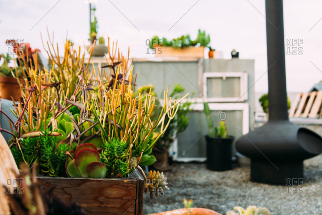 Succulent plants on a rooftop in Los Angeles, California