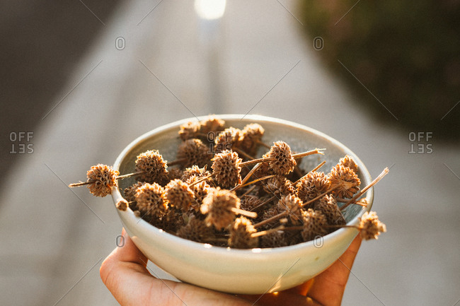 Person holding a bowl of dried flowers