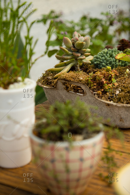 Close up of cactus and succulent plants