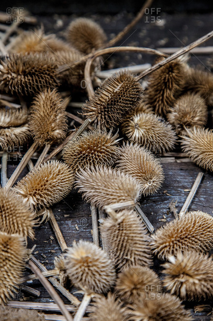 Dried thistle heads on a wood table
