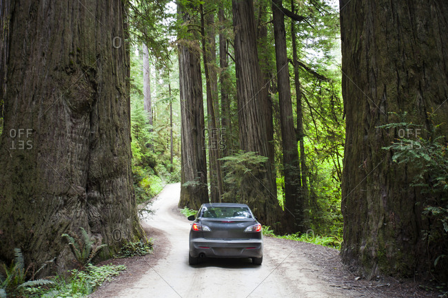 A car driving on Howland Hill Road towards Stout Grove in Jedediah Smith Redwoods State Park