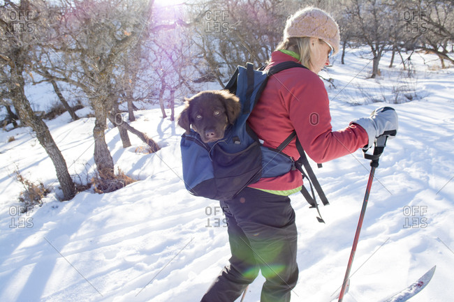 A woman  cross country skiing with puppy in a backpack getting a ride, La Plata Canyon, Mayday, Colorado