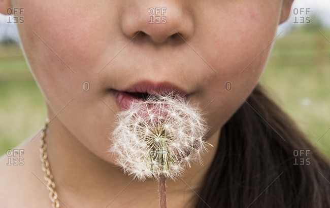 Young girl makes a wish and blows on a dandelion in Louisville, Colorado