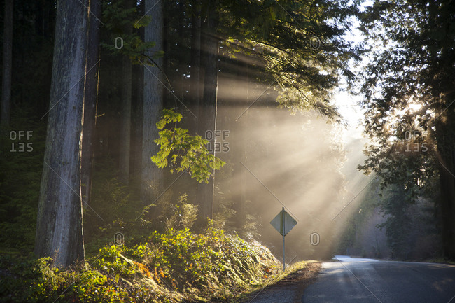 Beams of sunlight shine through the canopy on to a country road in British Columbia, Canada