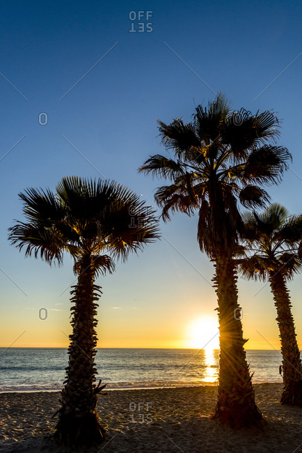 Doheny Beach Sunset behind the palms