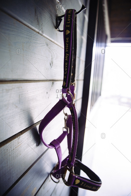 A horse halter hanging in a barn
