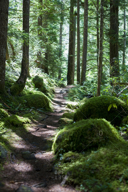 Umpqua River Trail
