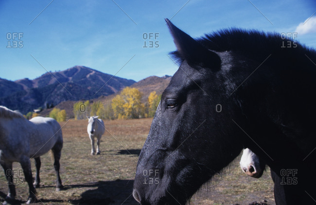 Horses standing in a pasture with mountains in the distance