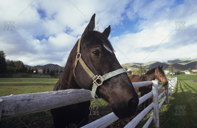 Horses standing at a wooden fence