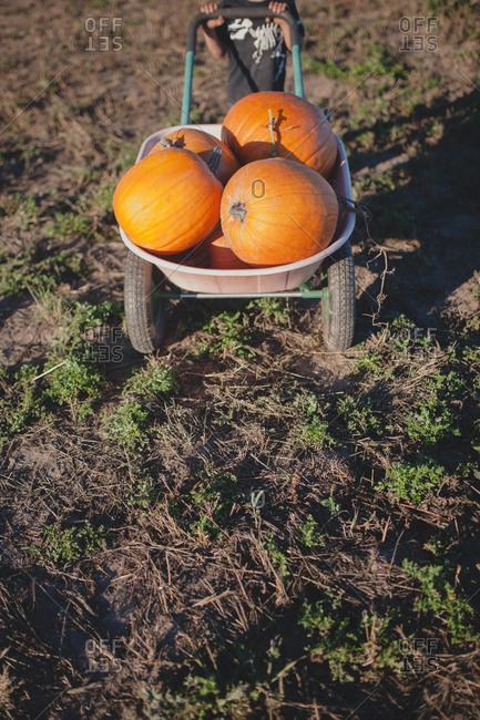 Child pushing wheelbarrow full of pumpkins