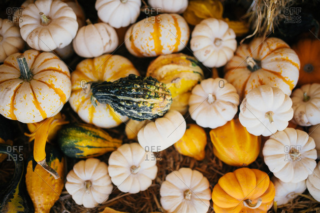 Arrangement of colorful pumpkins and gourds