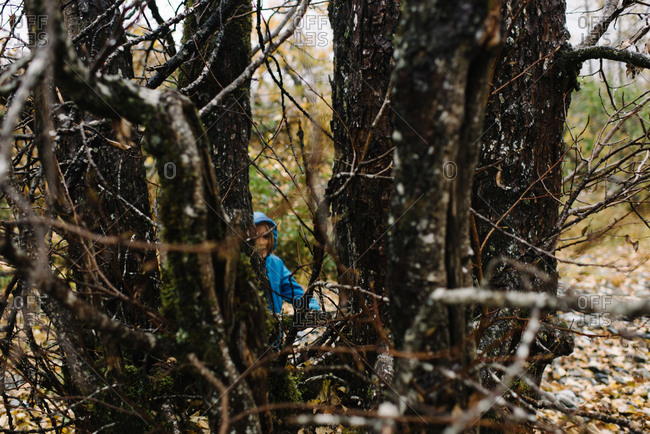 Boy peeking through trunks of a tree