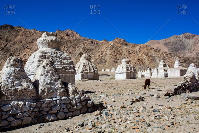Shey, Ladakh, India - August 30, 2010: Chortens and Himalayan desert landscape
