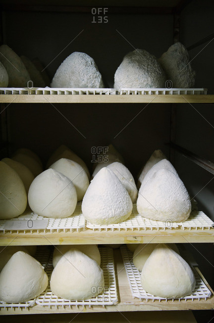 Fresh ricotta cheese aging on shelves in cheese plant