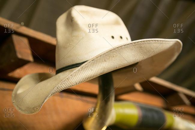 Cowboy hat hanging on bull horns