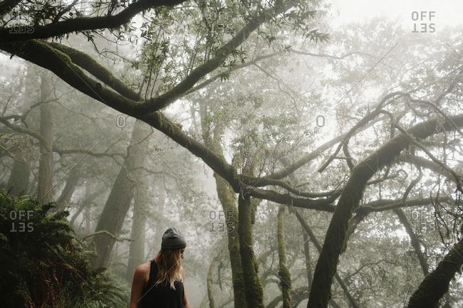 Woman walking in foggy rainforest