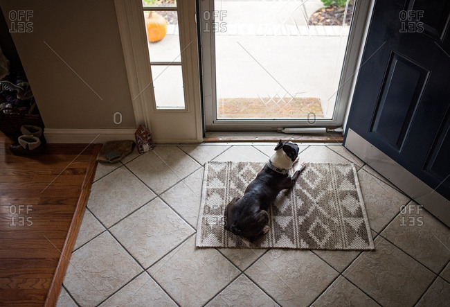 A dog sits patiently by the front door