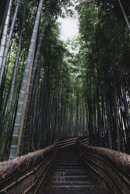 Stair path through the Arashiyama Bamboo Grove, Kyoto, Japan