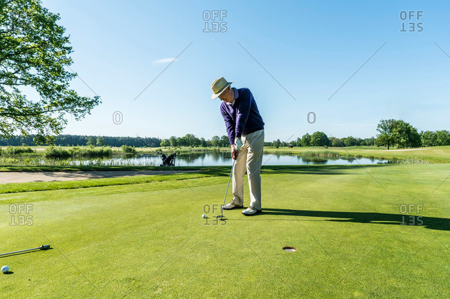Golfer putting on the green, Schleswig-Holstein, Germany