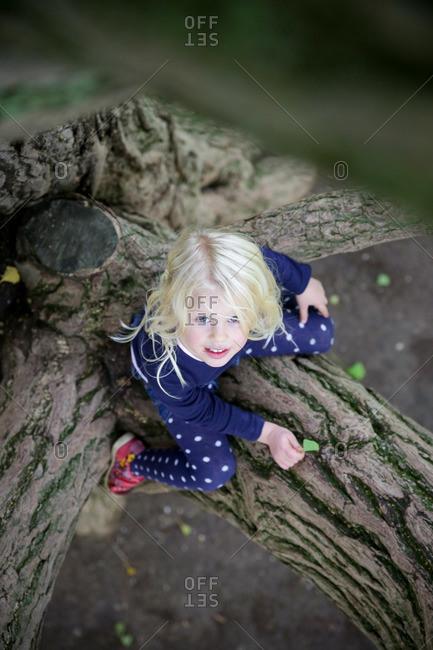 Girl sitting in a ginkgo tree, Goseck, Saxony-Anhalt, Germany