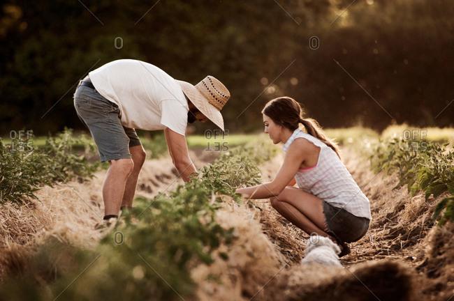 Couple tending to plants on a farm