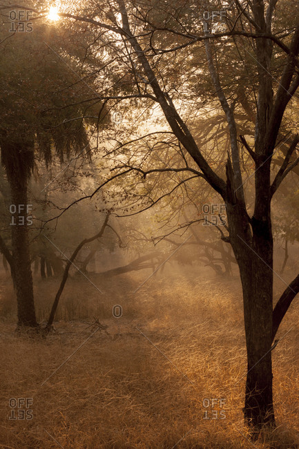 Sunrise in the forest of Ranthambore National Park, Sawai Madhopur, Rajasthan, India