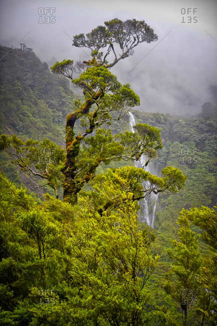 Foggy view of Doubtful Sound in Fiordland National Park, Wilmot Pass Road, South Island, New Zealand